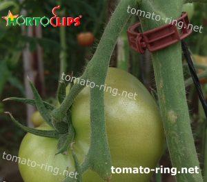 tomato clip used in crops